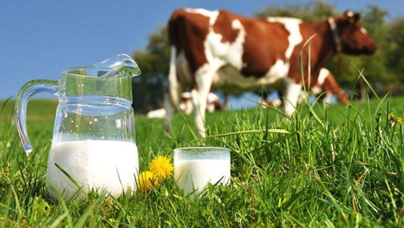 İnek Sütü Yerine Ayran